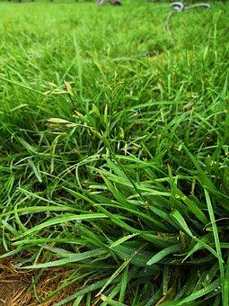 Grass, Wet, Dew, Nature, Green, Fresh