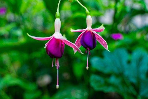 Garden, Flower, Petals, Purple, Violet, Aroma