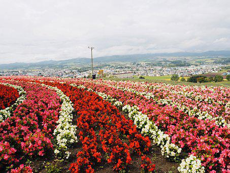 Japan, Hokkaido, Furano, Kamifurano, Flower, Garden