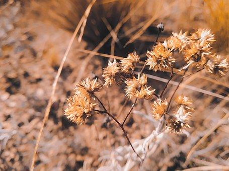 Plant, Vegetation, Flora, Mother, Bloom, Grass, Organic