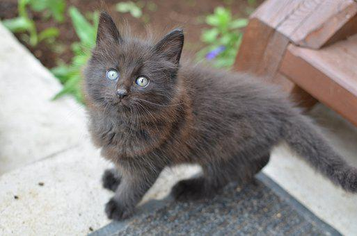Kitten, Cute, Feline, Kitty
