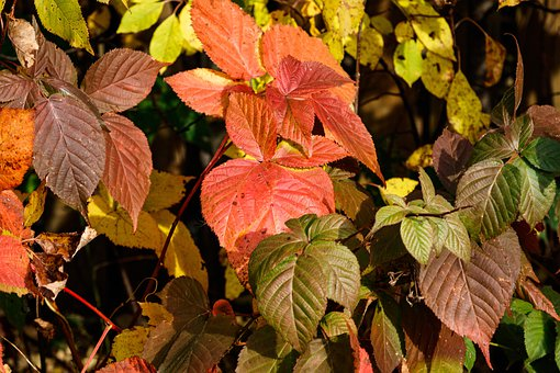 Autumn, Foliage, Colorful, Fall Foliage, Bush, Mood