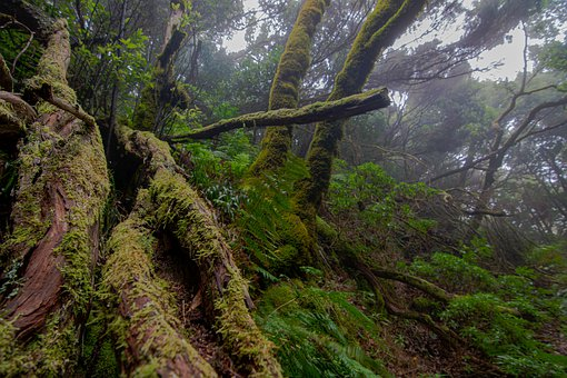 Moss, Fog, Trees, Mystic, Forests, Nature