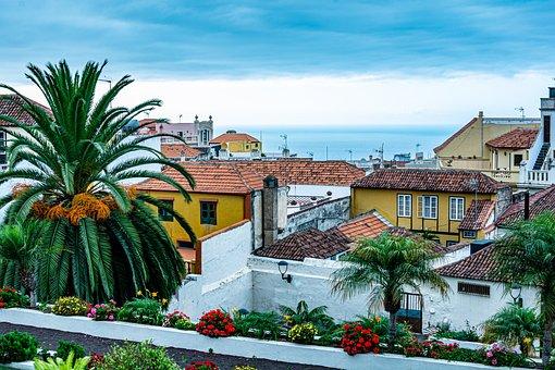 Tenerife, People, Orotava, Palms, Landscape