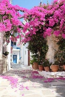 Fleur, Alley, Flower, Pink, Rose, Nature, Flora, Petal