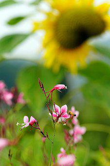 Sunflower, Flower, Flowers, Summer, Yellow, Beautiful