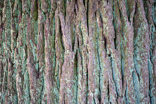 Structure, Background, Tree Bark, Wood