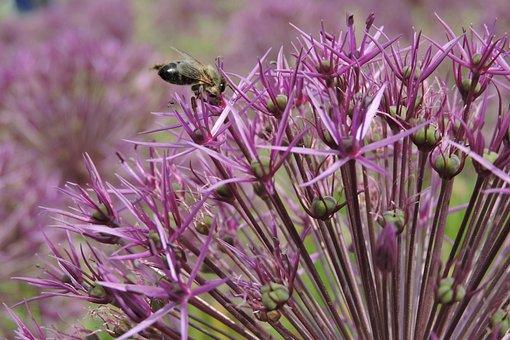 Wasp, Bee, Insect, Honey, Nature, Pollen, Garden
