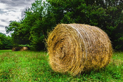 Straw, Hay, Agriculture, Field, Nature, Summer, Rural