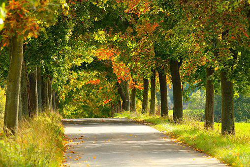 Trees, Alley, Autumn, Nature, Path, Road, Green