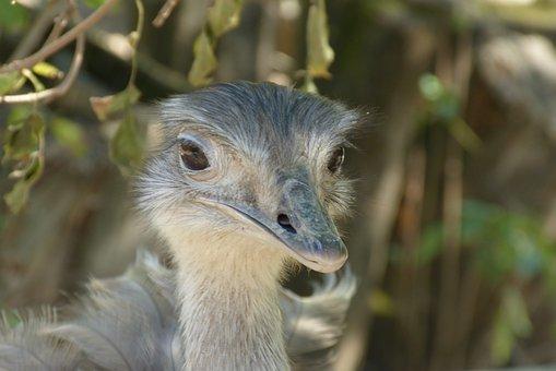 Bouquet, Bird, Ostrich, Close Up, Animal World, Head