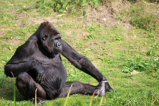 Zoo, Primate, Monkey, Mammal, Animal World, Animals