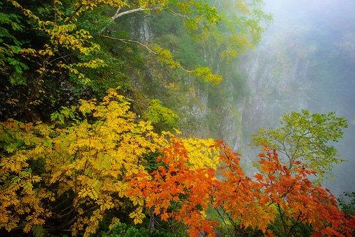 Landscape, Autumnal Leaves, Yellow Leaves, Maple, Rowan