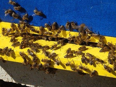 Honey Bees, Bee, Bees, Nature, Hive, Beehive, Pollen