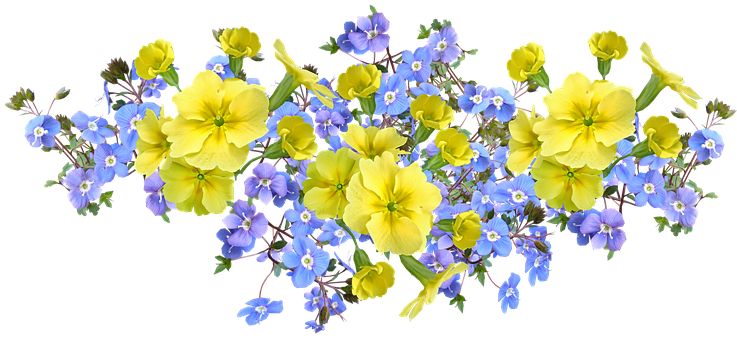Flowers, Arrangement, Yellow, Primroses, Blue, Veronica