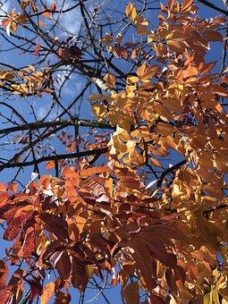 Canada, Bc, Port Coquitlam, Fall, Leaves, Autumn