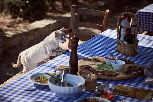Cat, Eat, Table, Hunger, Steal, Pet, Animal, Food