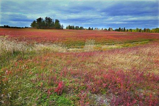 Landscape, Nature, Trees, Sky, Colors, Environment