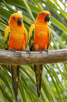 Birds, Conure, Parrot, Yellow, Colorful, Exotic