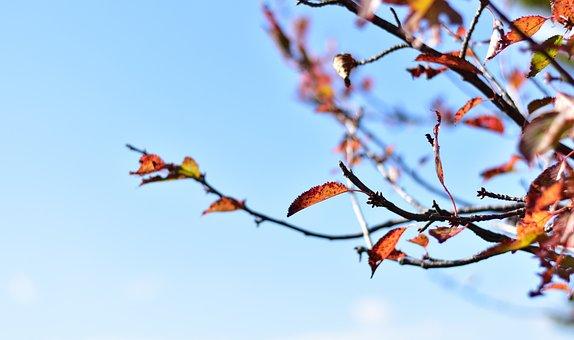Autumn, Season, Colorful, Yellow, Leaves, Fall, Leaf