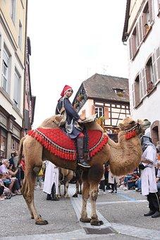 Camel, Bedouin, Landscape, Festival, Animals