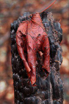 Forest Fire, Burned, Fire, Damage, Leaves, Trees