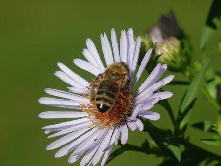 Bees, Honeybees, Honey, Honeycomb, Yellow, Pollen, Fly