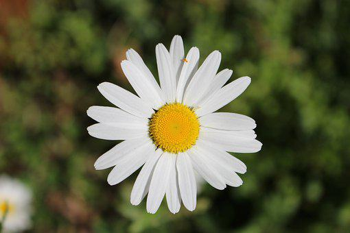 Flower, Focus, Bloom, Nature, Spring, Garden, Red, Life
