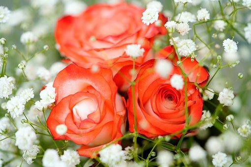 Rose, Red Roses, Red Rose, Flower, Nature, Gypsophila