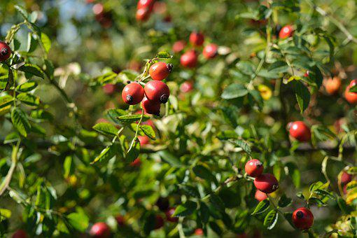 Darts, Vitamins, Fruits, Health, Foliage, Organic