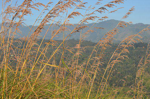 Grass, Hills, Landscape, Nature, Field, Green