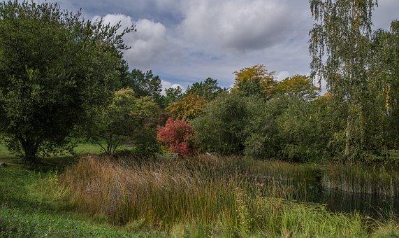 Autumn, Nature, Trees, Leaves, Landscape, Romantic