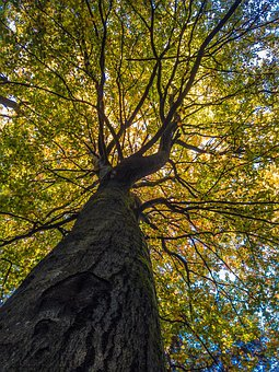 Wood, Autumn, Nature, Forest, Tree, Landscape, Leaves
