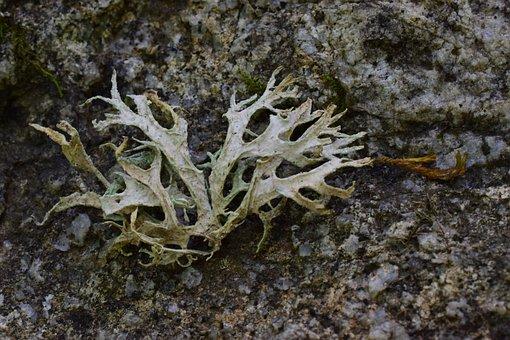 Lichen, Foam, Tree, Plant, Forest, Summer, Wood