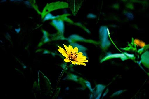 Flowers, Nature, Summer, Macros, Leaves