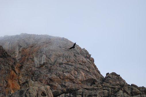 Condor, Argentina Patagonia, Patagonia, Argentina