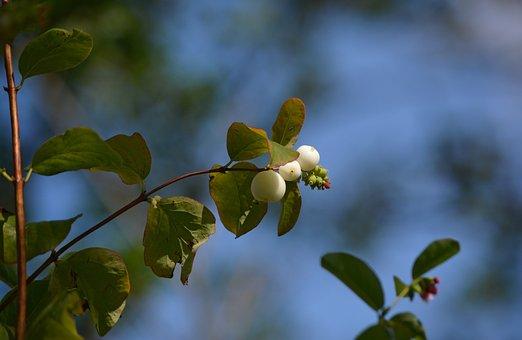 Flower, Burgeon, Blossom, Germ, White, Pearls, Branch