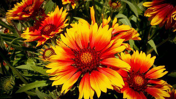 Flower, Yellow, Red, Spring, Plant, France, Hérault