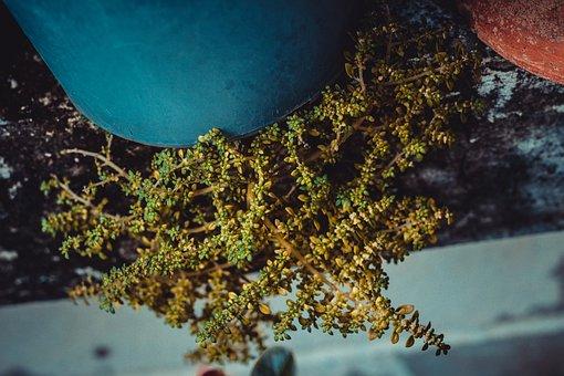 Moss, Small, Nature, Blade, Green, Plant, Mos, Macros