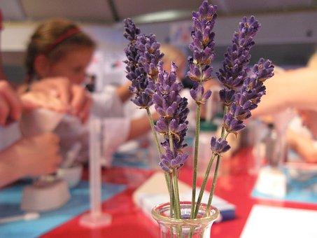 Experiment, Lavender, Smell, Fragrance, Flower