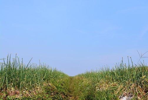 Grass, Sky, Green, Blue, Nature, Summer, Outdoor