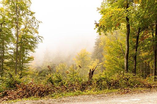 Nature, Forest, Path, Autumn, Tree, Haze