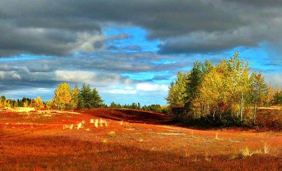 Landscape, Nature, Trees, Environment, Sky, Colors