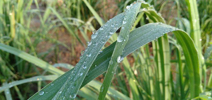 Fresh, Light, Water, Green, Plant, Wet, Environment