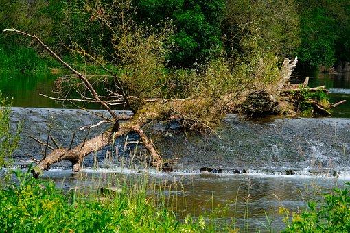 Tree, Waterfall, Nature, Landscape, Water, Bach