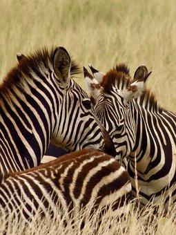 Africa, Tanzania, Kenya, Safari, On Safari, Wildlife
