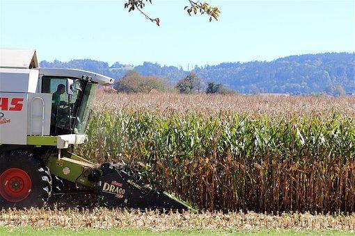 Corn Harvest, Combine Harvester, Cornfield, Agriculture
