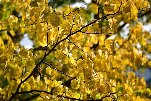 Autumn, Season, Colorful, Yellow, Leaves, Fall, Leaf