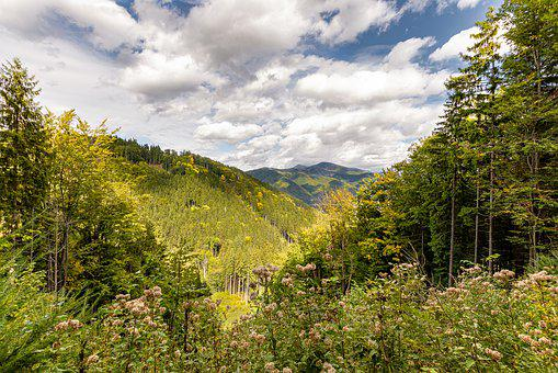 Nature, Forest, Trees, Autumn, Forests, The Sky