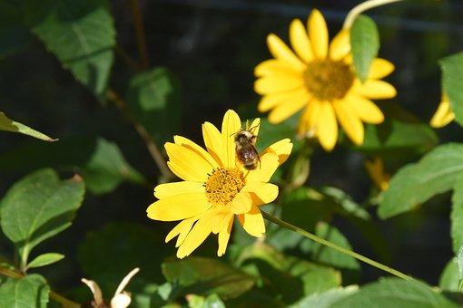 Flower, Bloom, Bee, Nature, Garden Pollen, Petals